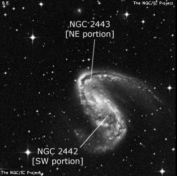 NGC 2443